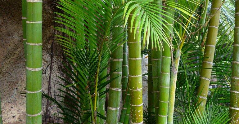 Dumnezeu și Bambusul
