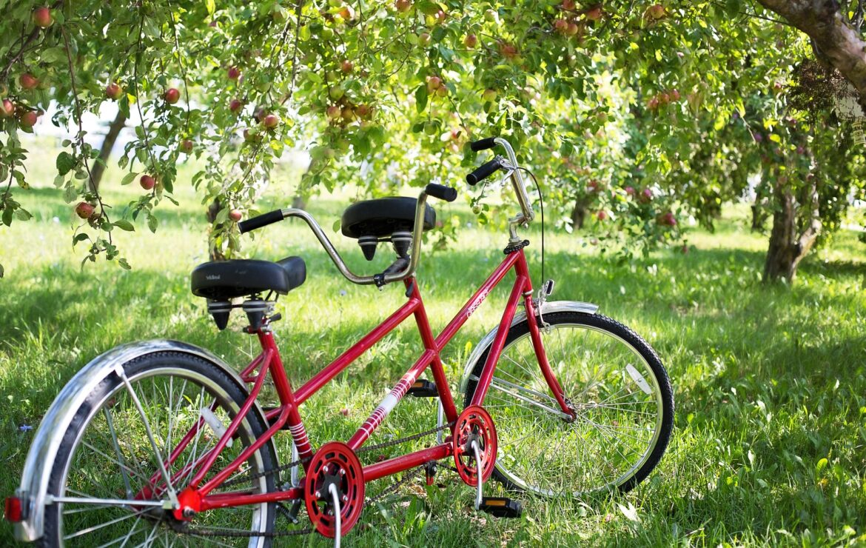 Bicicleta lui Dumnezeu